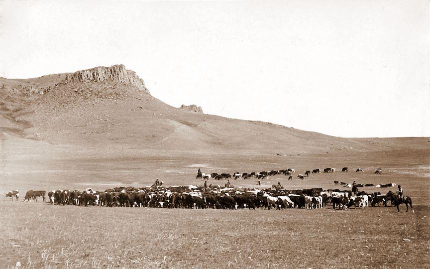 Cattle_Roundup,_Great_Falls,_MT,_Geo_B_Bonnell,_c1890