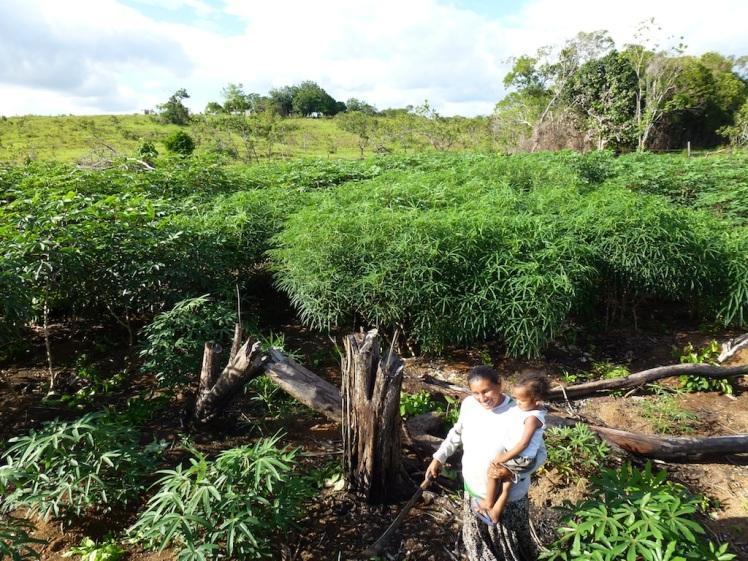 2. Cassava Farm
