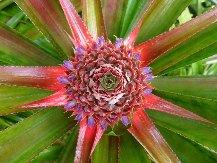 4. Pineapple Plant