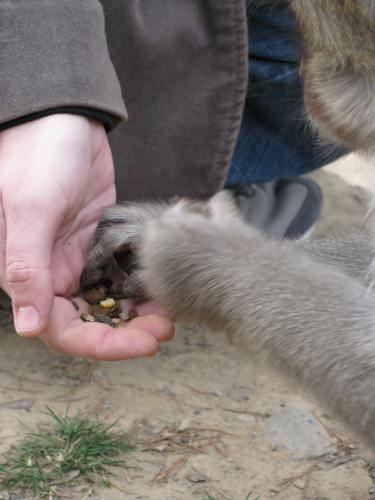 Primate hands. Photo by Teresa Gonsoski, 2009.