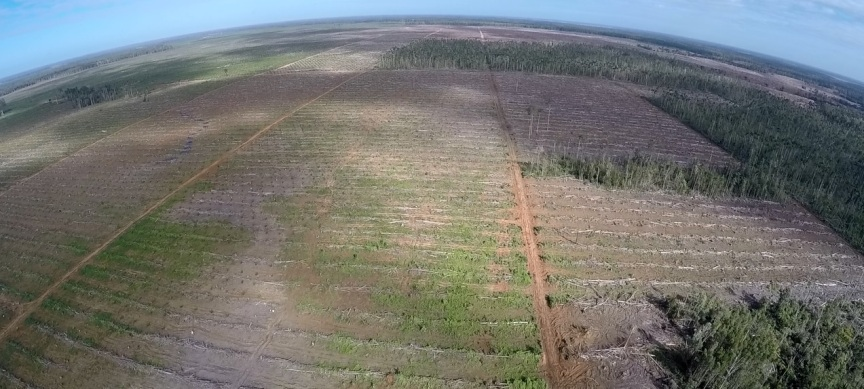 oil palm droning