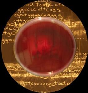Fig-5b-Microbial-Art-483x510