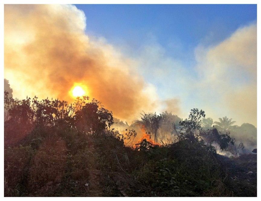 forest-fires-near-castelo-2013