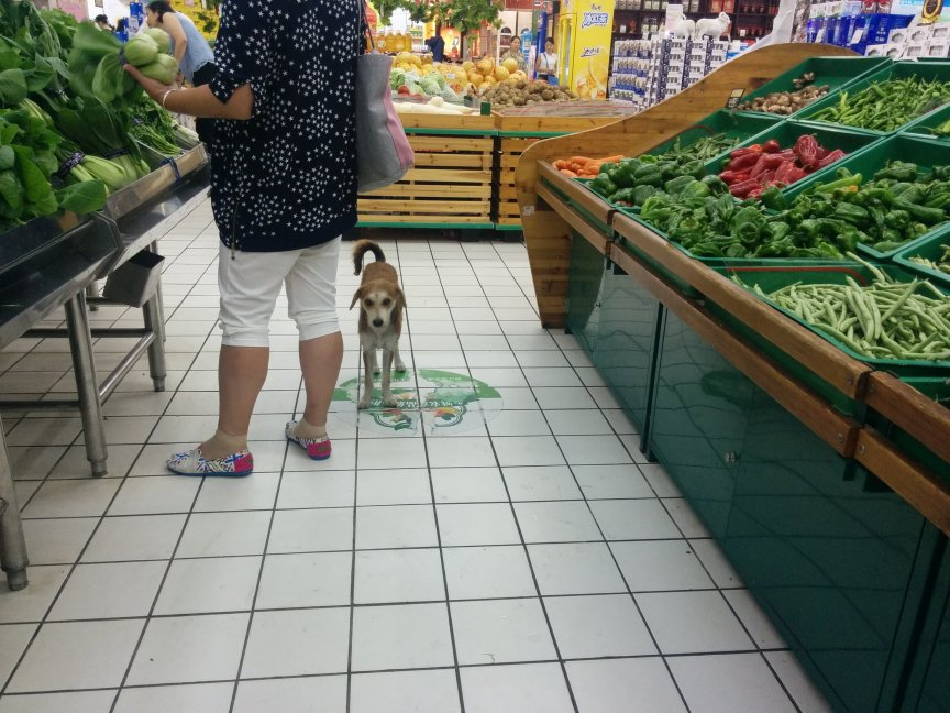 rural supermarket w dog