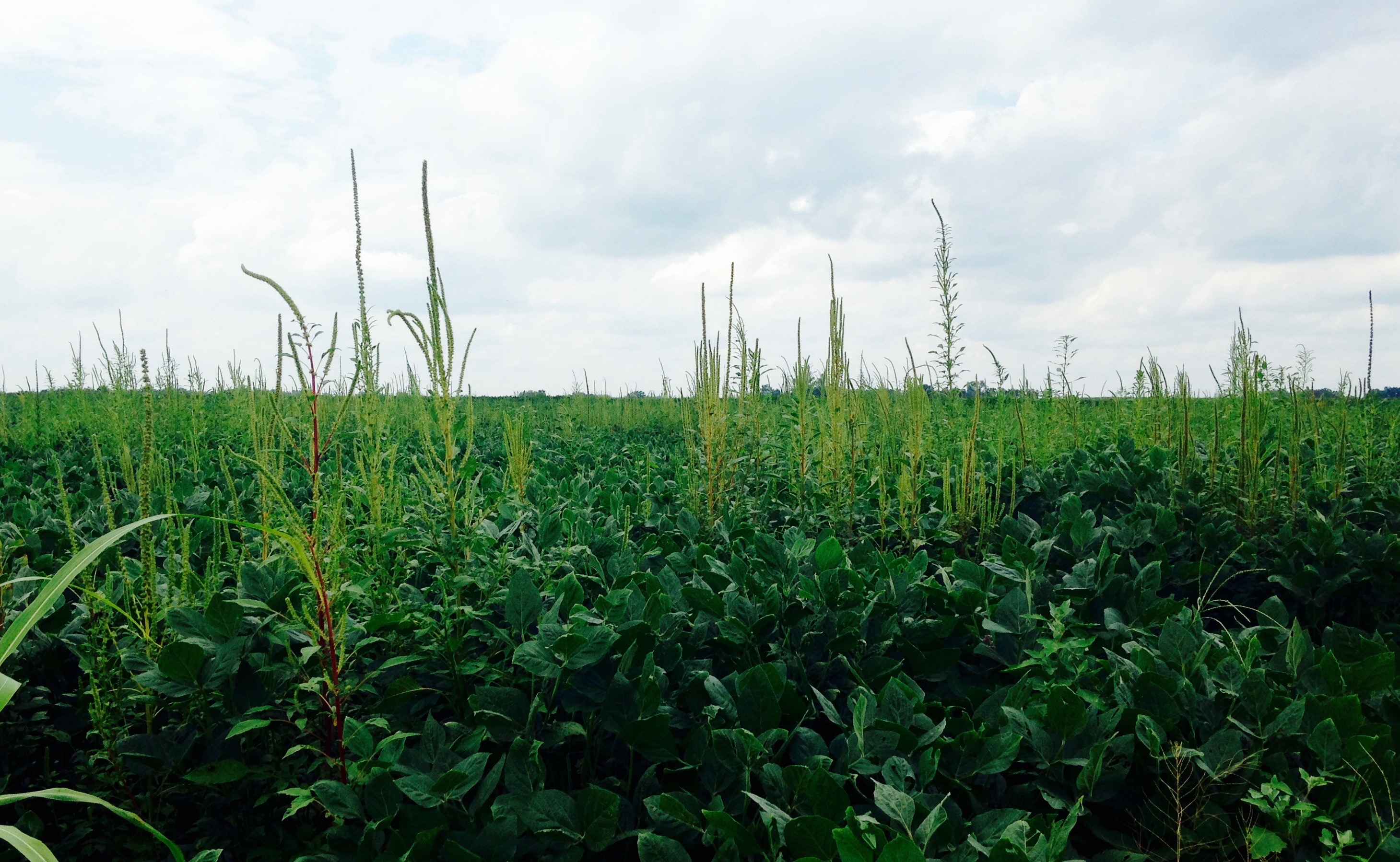 Weeds, Herbicides, and Bodies: Emerging Entanglements in